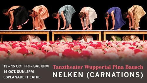 Nelken (Carnations)